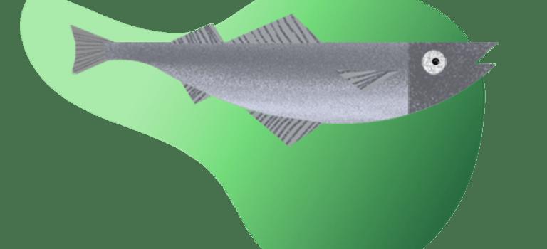08-Grey-Mullet-768x563